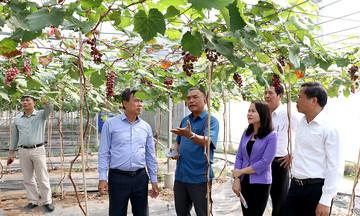 Phát triển HTX vùng dân tộc thiểu số ở Bắc Giang (Bài cuối): Cần sự vào cuộc đồng bộ
