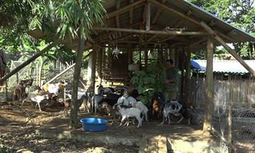 Phát triển HTX vùng dân tộc thiểu số ở Bắc Giang (Bài 1): Khó khăn không chỉ trước mắt