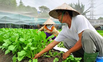 Nông dân Tân Liên tạo bước ngoặt nhờ trồng rau sạch