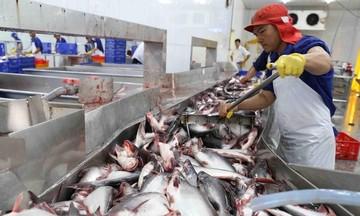 Xuất khẩu cá tra sang Mỹ có cơ hội lớn do nguồn cầu tăng mạnh