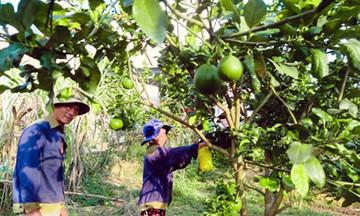 Chăm học nghề giúp nông dân Định Thành 'sống khỏe'
