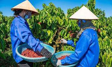 Khởi sắc xuất khẩu mặt hàng nông sản từ cây công nghiệp