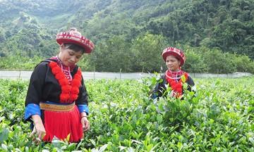 Nội lực vươn lên của người Dao ở Bắc Kạn (Bài 1): Diện mạo mới nơi thôn bản vùng cao
