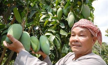 Bài toán tiêu thụ dài hơi cho nông sản Việt