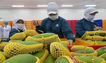 Rau quả trong nước rớt giá, xuất khẩu vẫn khởi sắc