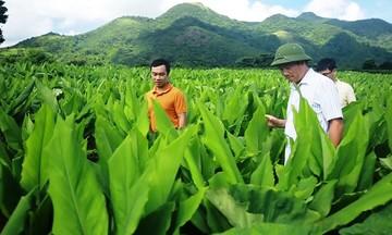 HTX Vân Di: Hướng đi bền vững từ chế biến 'củ vàng' hữu cơ