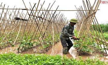Thu lời lớn từ sản xuất rau an toàn ở HTX Chúc Sơn