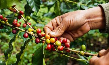 Thiếu container rỗng tiếp tục 'đe dọa' xuất khẩu cà phê