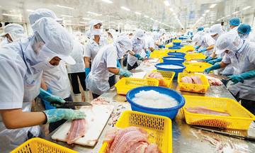 'Soi' đà phục hồi của xuất khẩu cá tra