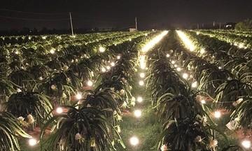 Giải bài toán tiêu thụ nông sản cho HTX tại Bình Thuận