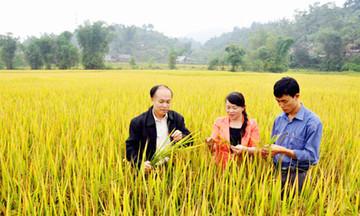 Sản xuất VietGAP đổi thay đất lúa Phương Viên