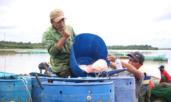 Học nghề chăn nuôi giúp người dân Ea Nuôl tạo sinh kế bền vững