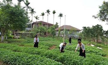 Giảm nghèo bền vững cho đồng bào dân tộc miền núi Hà Tĩnh (Bài 1): 'Cú hích' từ chính sách
