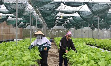 Chuyển hướng sản xuất nông nghiệp ở Đơn Dương (Bài cuối): Hướng đi bền vững để đồng bào thoát nghèo
