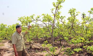 Khởi sắc nông thôn mới Phú Hòa (Bài 2): Đánh thức tiềm năng nông nghiệp