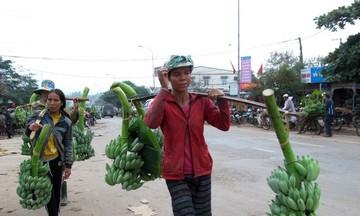 Người Vân Kiều tìm hướng thoát nghèo (Bài 1): Tập trung phát triển nông, lâm nghiệp