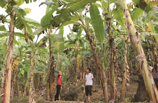 13-6-Bai-2-Cay-chuoi-dem-lai-a-4927-6015