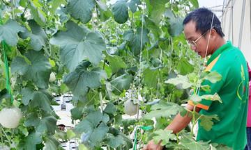 Hoài Ân hướng tới nông nghiệp công nghệ cao