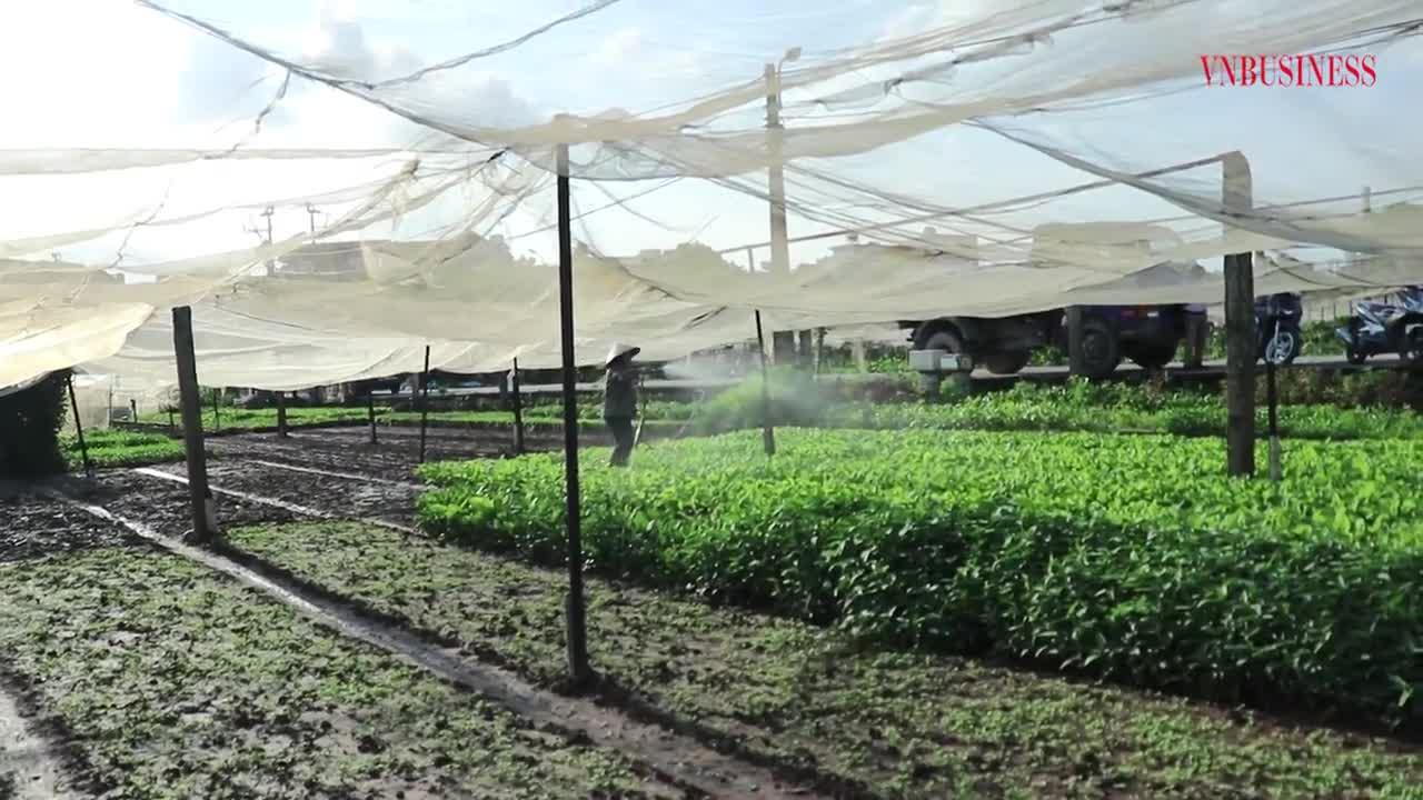 HTX Lĩnh Nam: Rau đã sạch rồi, giờ phải cần siêu sạch