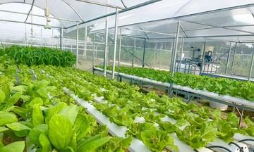 Nông nghiệp công nghệ cao hút khách ở vùng rau Túy Loan