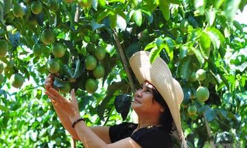 HTX Kon Đào: Sản xuất xanh để liên kết chuỗi bền vững