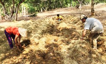 Chuyển đổi nông nghiệp gắn với dạy nghề ở Xuân Long