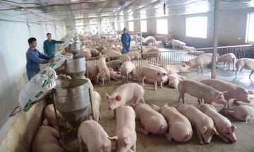 Giá lợn hơi thấp nhất 64.000 đồng/kg, người chăn nuôi đối mặt nhiều thách thức