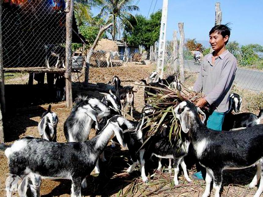 Ninh-Ha-i-2-3091-1624595800.jpg