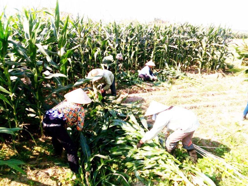 Tuyen-Quang-2-6270-1625457488.jpg