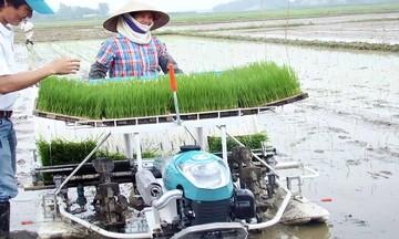 'Ba nhà' liên kết làm nên thương hiệu gạo ngon Phú Xuân