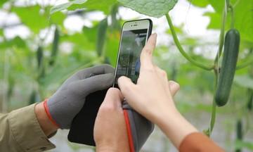 Khoa học công nghệ đánh thức vùng rau Gia Cát