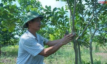 HTX Hưng Thịnh ăn nên làm ra từ nghề ươm cây giống