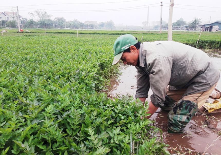 Khai-Thai-1-9045-1626670992.jpg