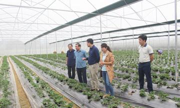 Cao Bằng tạo bước đột phá cho nông nghiệp thông minh