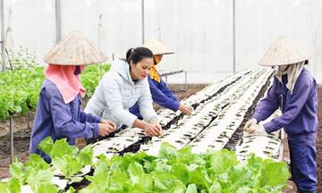 Tam Nông giải 'bài toán' tăng thu nhập nhờ đào tạo nghề