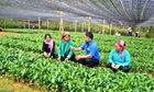 Đồng bào dân tộc thiểu số ở Lào Cai làm kinh tế HTX (Bài 1): Thủ lĩnh thanh niên nơi thượng nguồn sông chảy
