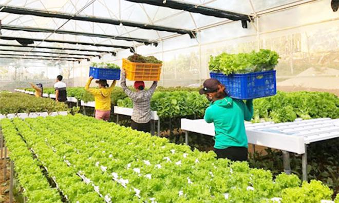 BB bắt nhịp xu thế nông nghiệp 4.0