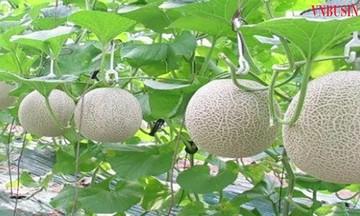 Khoa học công nghệ nâng 'chất' nông nghiệp Hà Giang (Bài 2): Thúc đẩy phát triển sản phẩm OCOP
