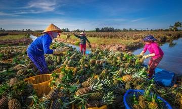 Người Khmer ở Hậu Giang vượt khó vươn lên (Bài 2): Đoàn kết giúp nhau làm kinh tế