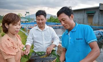 Phát triển kinh tế HTX vùng dân tộc thiểu số ở Lâm Đồng (Bài 2): Hiệu quả kinh tế từ nuôi cá tầm