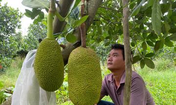 Khan hiếm vật tư nông nghiệp, nông dân phía Nam khó mua cả túi bao trái