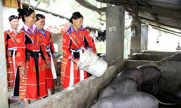 Chăm lo đời sống đồng bào DTTS ở Quang Bình (Bài 2): Phát triển nông nghiệp theo hướng hàng hóa