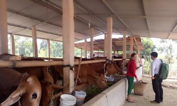 Giá thức ăn chăn nuôi tăng cao, Bộ NN&PTNT khuyến nghị đẩy mạnh chăn nuôi trâu, bò, dê thịt