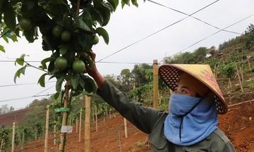 'Điểm tựa' xây dựng nông thôn mới ở Chiềng Sung
