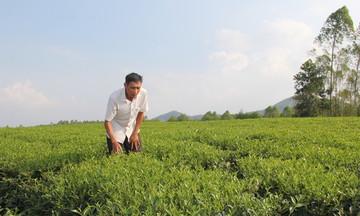 Kinh tế hợp tác vùng dân tộc Phú Thọ phát triển bền vững (Bài 2): Tạo việc làm cho lao động là người dân tộc thiểu số