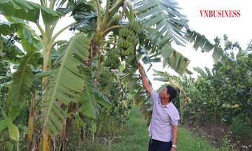 Kinh tế hợp tác vùng dân tộc Phú Thọ phát triển bền vững (Bài 1): Mạnh dạn ứng dụng khoa học công nghệ