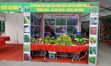 Kinh tế hợp tác vùng dân tộc Phú Thọ phát triển bền vững (Bài cuối): Hỗ trợ để các HTX vươn lên