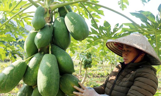 Mở hướng đi mới với chuỗi giá trị nông sản sạch