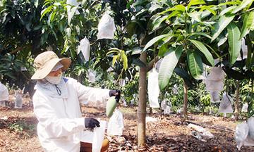 HTX Ngọc Lan 'phất lên' từ trái cây VietGAP