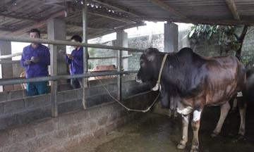 Nâng cao đời sống đồng bào DTTS ở Mường Khương (Bài 1): Bắt đầu từ công tác giảm nghèo